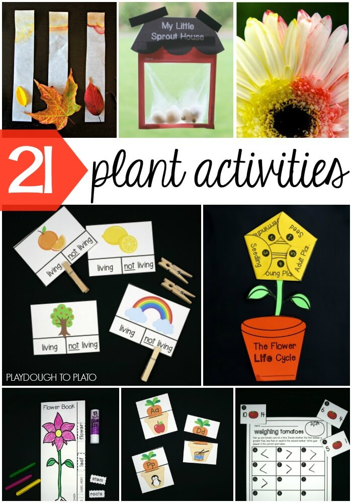 21 Must-Try Plant Activities for Kids!