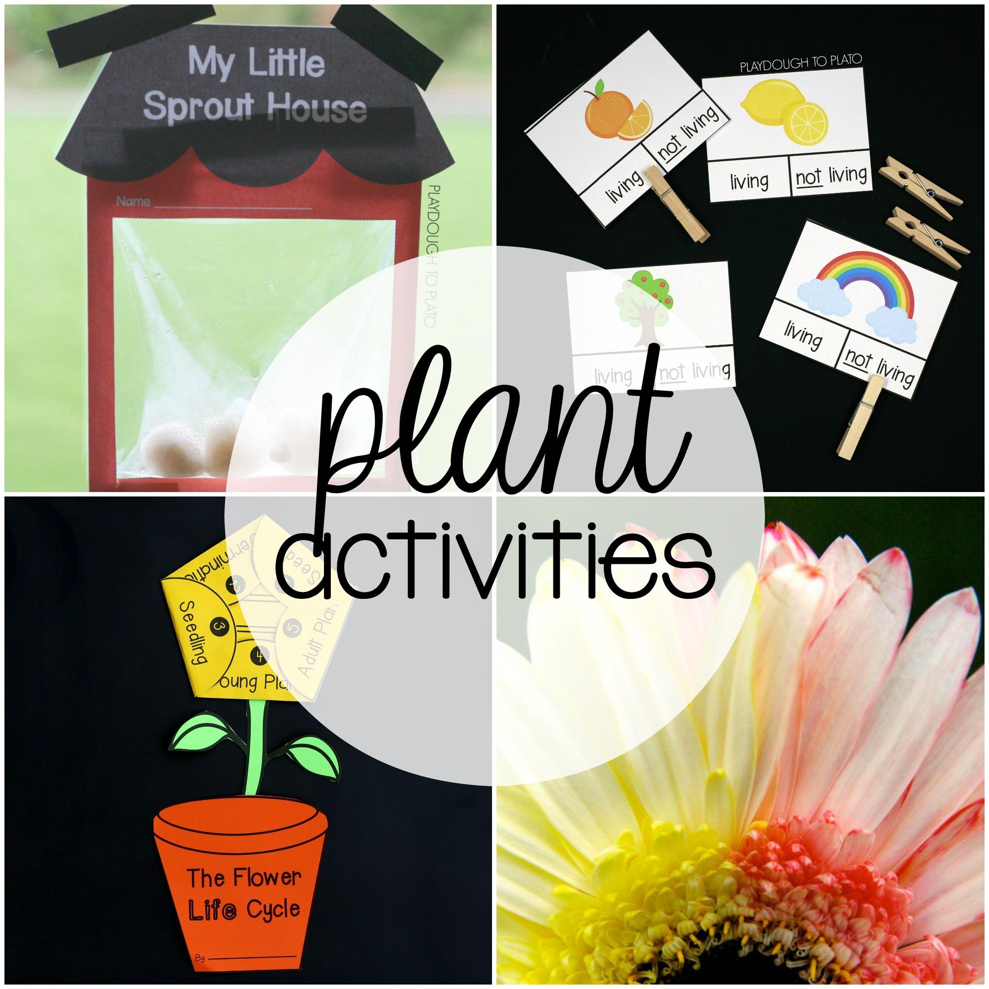 Plant Activity Pack The Stem Laboratory