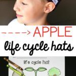 Apple Life Cycle Hat
