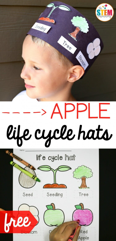 Free apple life cycle hats!