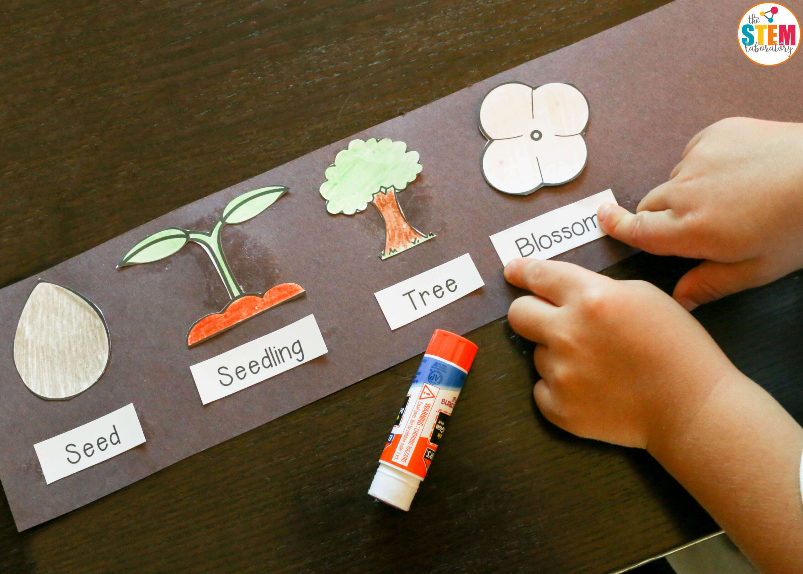 Making a free apple life cycle hat! - The Stem Laboratory