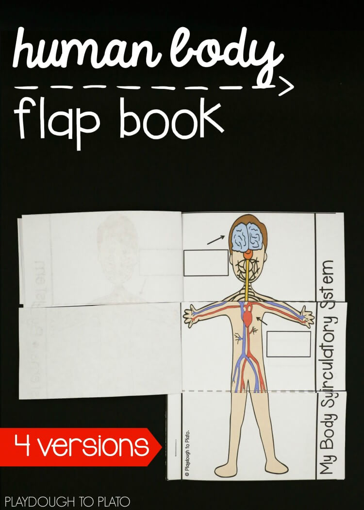 Interactive Human Body Flap Book The Stem Laboratory