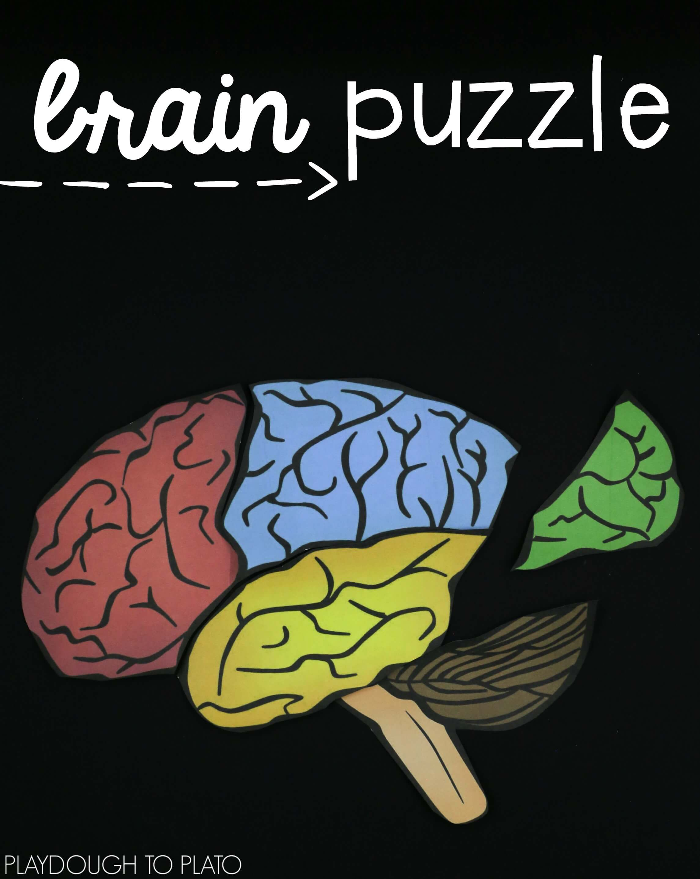 learn-about-the-parts-of-the-brain-as-you-solve-a-puzzle - The Stem ...