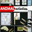 must-try-animal-activities-for-kids