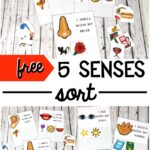 My Five Senses Sorting Cards