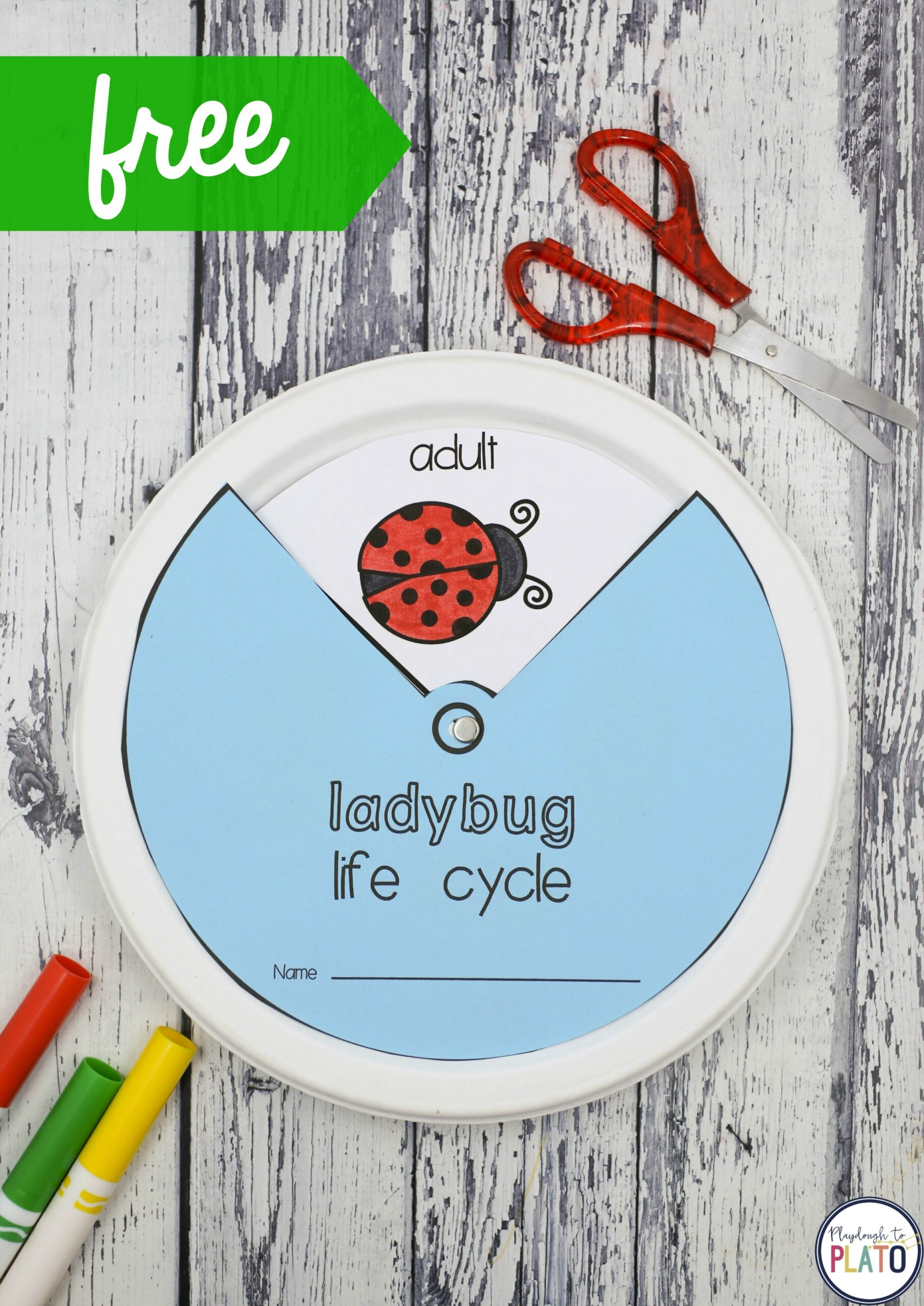 Ladybug Life Cycle Wheel