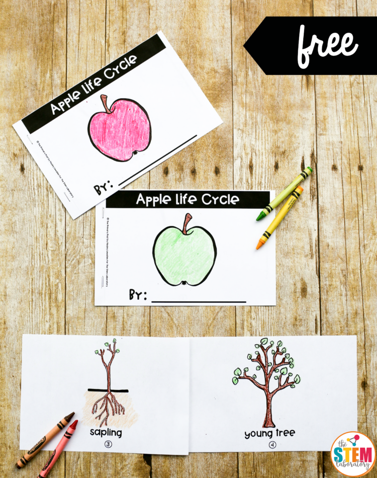apple life cycle book the stem laboratory