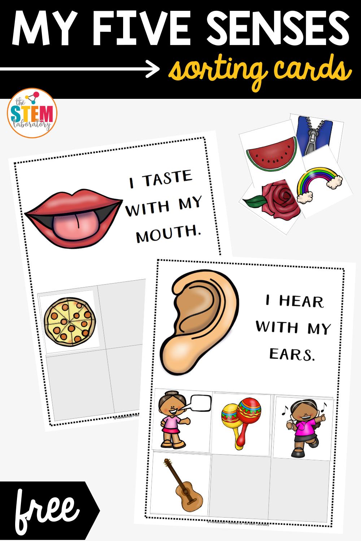 My Five Senses Sorting Cards